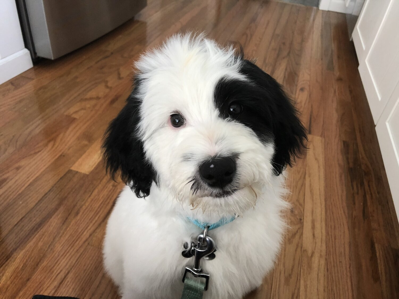 Trudno znaleźć imię dla psa, psia kość!